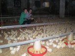Granja de pollos en casa rural Haritzalotz, Zurucuáin, tierra Estella :: Agroturismos en Navarra