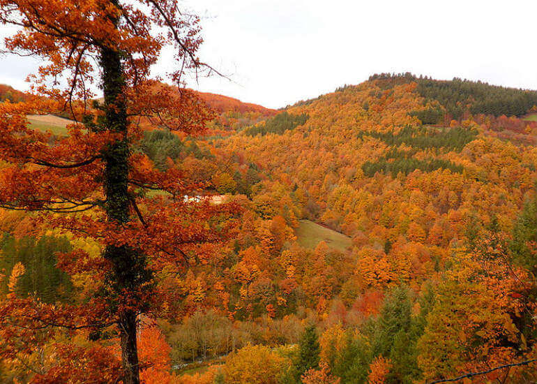 La selva de Irati en otoño :: Abelore, Casas Rurales de Agroturismo en Navarra
