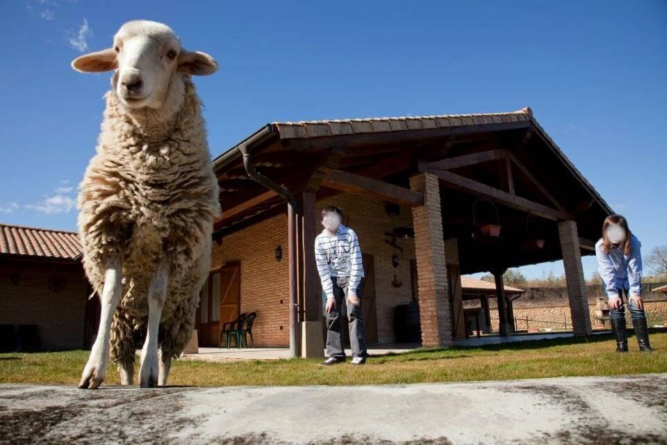 Experiencias de agroturismo y turismo familiar en Navarra :: Abelore, casas rurales de agroturismo en Navarra