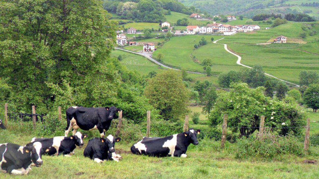 Vacas en el prado cerca de casa rural Eltson Etxea :: Abelore, Casas Rurales de Agroturismo en Navarra