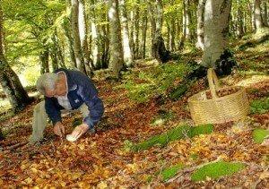 Picking mushrooms :: Abelore, rural agrotourism houses in Navarra, Spain