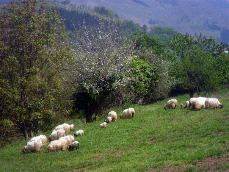 Eltson Etxea, casa rural de Agroturismo en Donamaría, Navarra