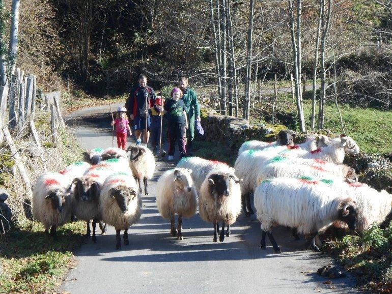 Cuidando las ovejas en casa rural Kastonea, Erratzu, valle de Baztan :: Agroturismos en Navarra
