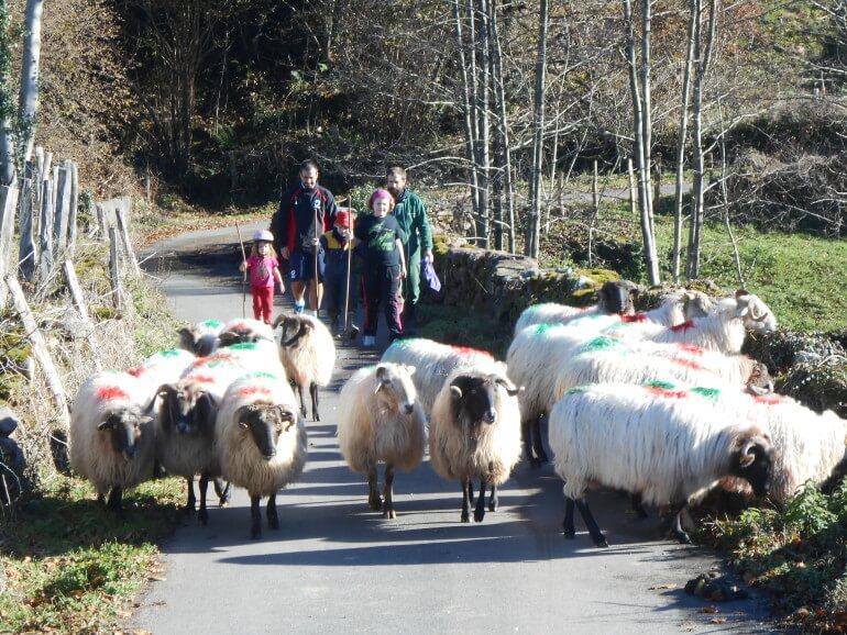 Paseos por el campo acompañando a las ovejas en casa rural Kastonea, Erratzu, Valle de Baztan :: Agoturismo en Navarra