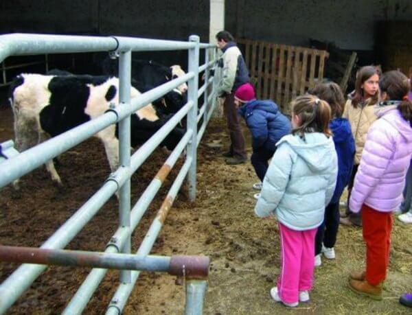 Agroturismos en Navarra :: Los peques dando de comer a las vacas