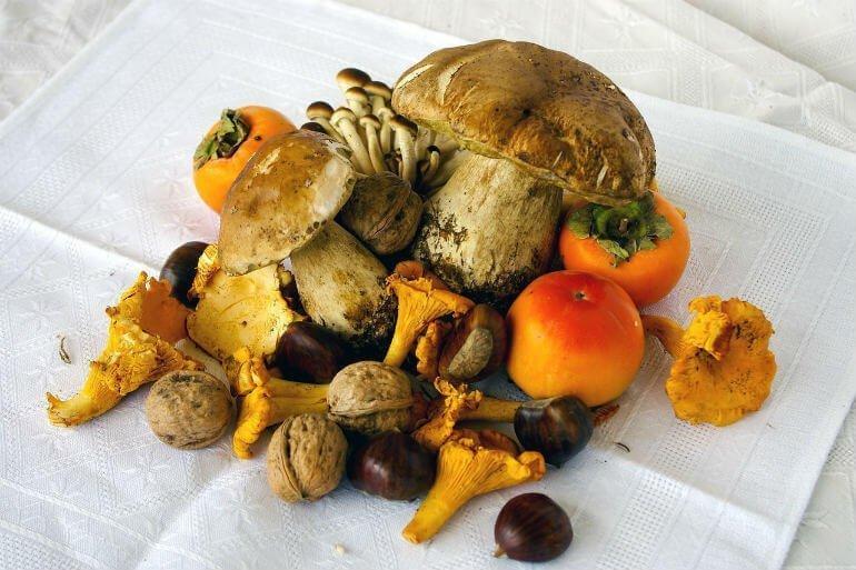 Setas, hongos y otros frutos del campo y los bosques :: Abelore, Casas Rurales de Agroturismo en Navarra