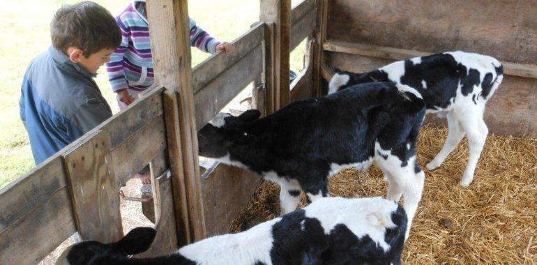 Actividades con animales en la granja :: Abelore, casas rurales de agroturismo en Navarra