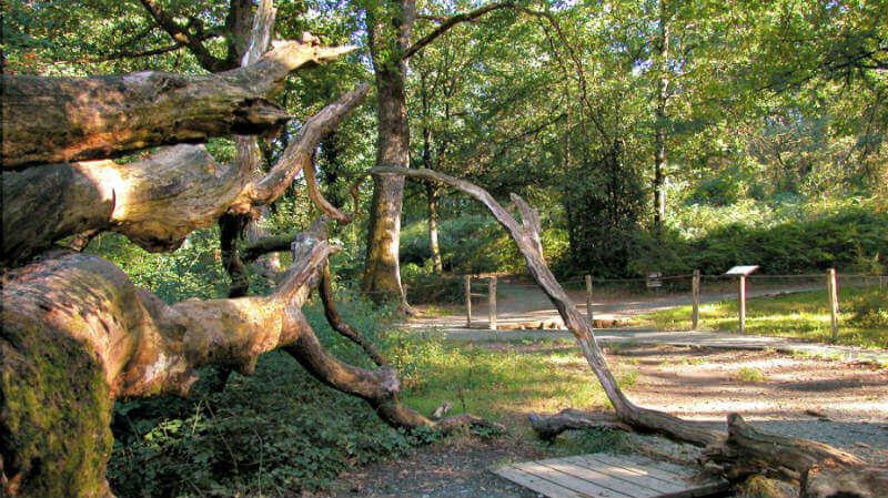 Bosque de Orgi - Turismo rural de agroturismo en Navarra