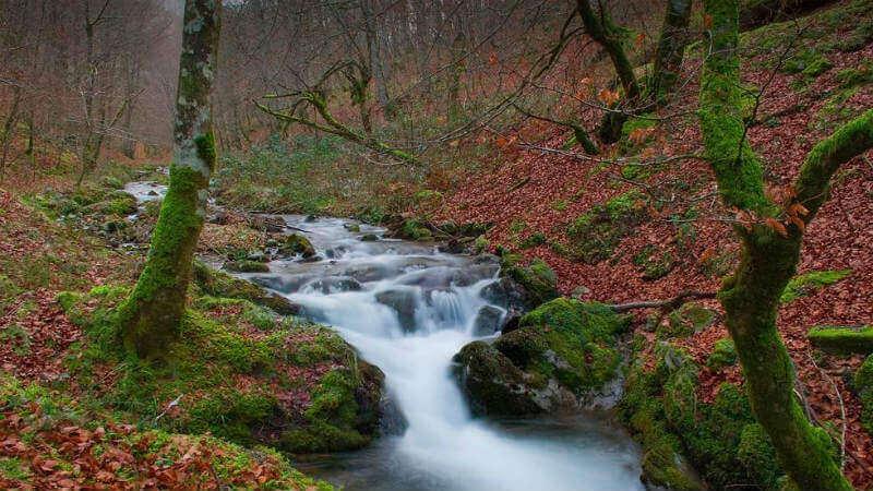 Bosque de Quinto Real - Turismo rural de agroturismo en Navarra